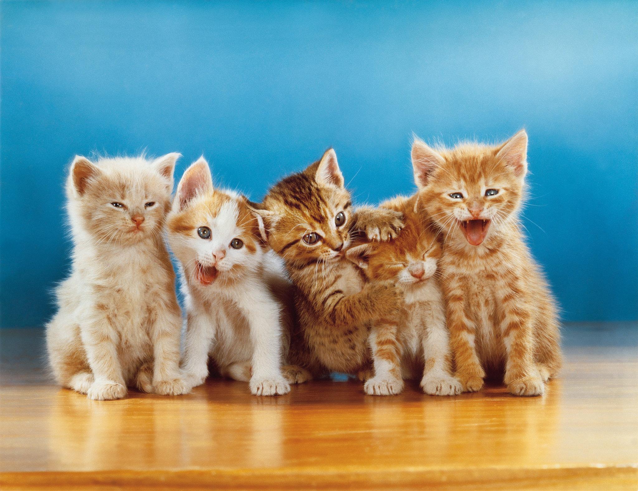 Walter chandoha il sommo fotografo dei gatti stile arte for Immagini gatti da colorare