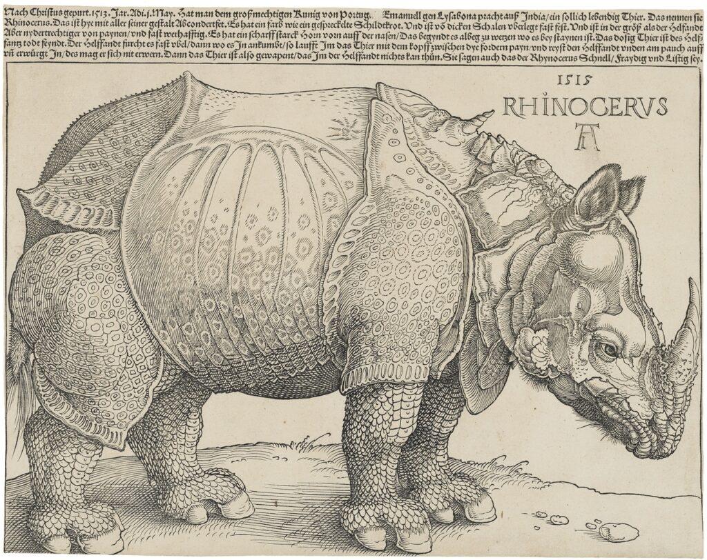 dure rinoceronte