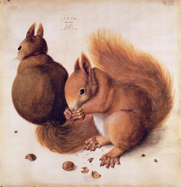 durer scoiattoli