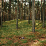 Wim Wenders Forest Peace Foresta di pace 2011 C-Print 127.1 x 141.7 cm Copyright: © Wim Wenders 2013