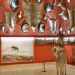 Allestimento mostra con opera di Maurizio Cattelan e Paola Pivi