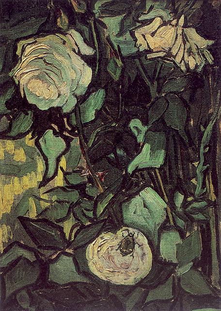 Rose selvatiche e coleottero