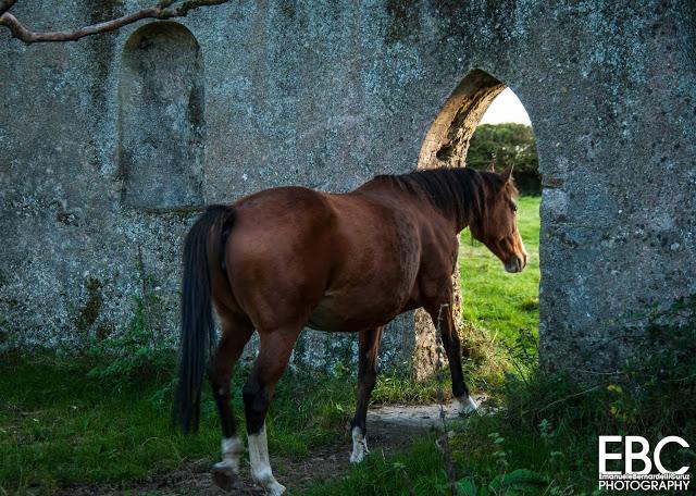 cavallo gotico