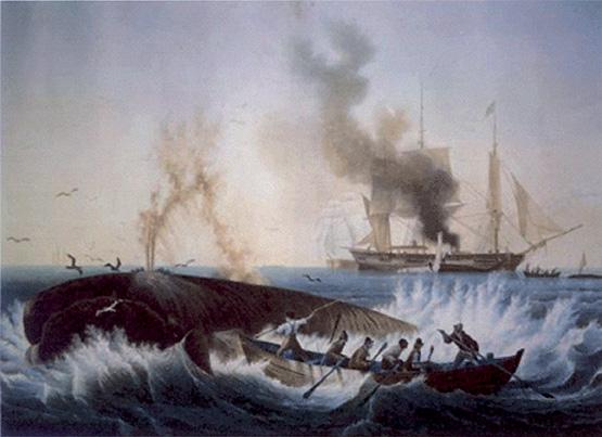 Ambroise-Louis Garneray, Scena di caccia alla balena. Le opere del pittore francese con tale soggetto furono ampiamente descritte ed elogiate da Herman Melville nel Moby Dick