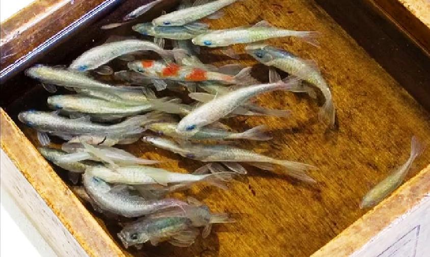 Dipingere pesci o granchi tanti tutorial stile arte for Contenitore per pesci