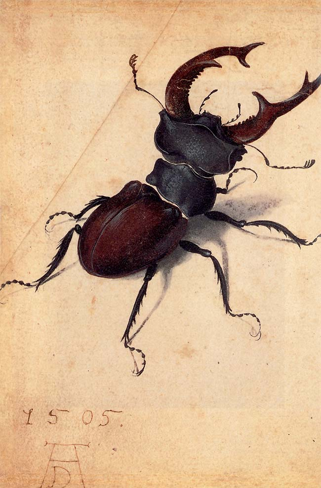 Albrecht Dürer, Cervo volante