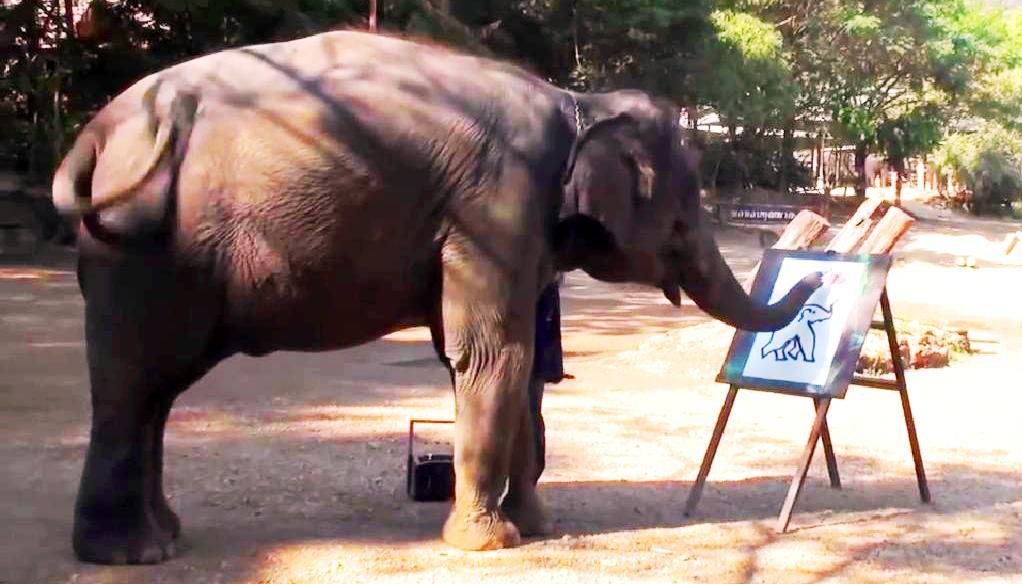 elefante copertina