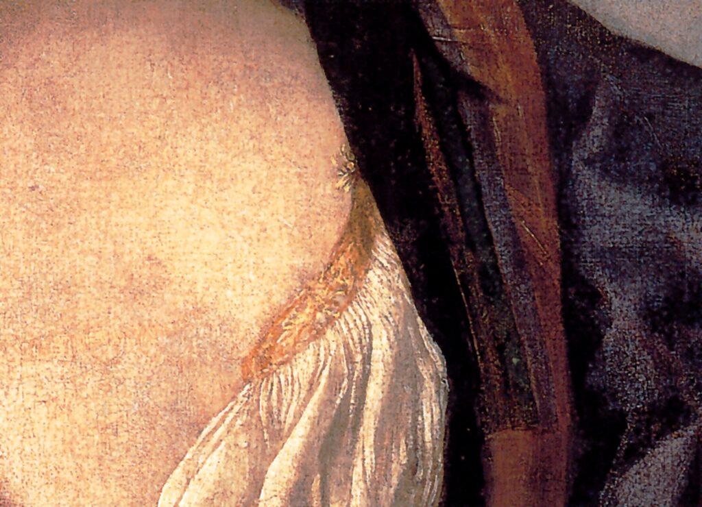 Tiziano Vecellio, Salomè con la testa del Battista, (particolare della viola nella scollatura) 1515 circa, Olio su tela, 90×72cm, Roma, Galleria Doria Pamphili