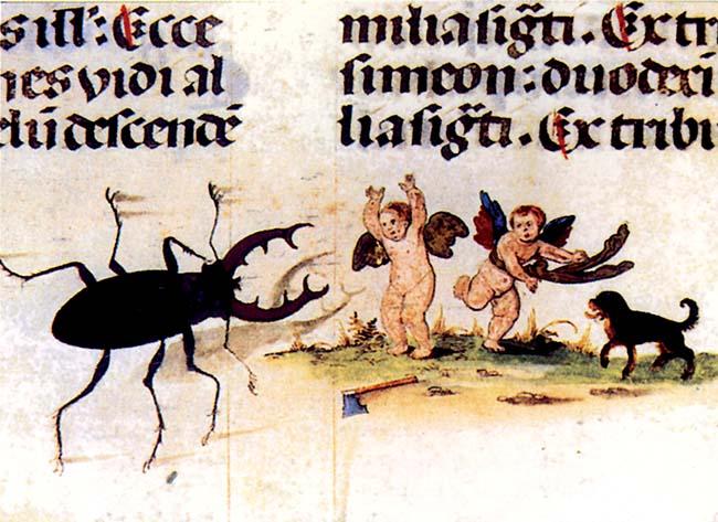 Anonimo, Un cervo volante aggredisce due angioletti, miniatura del 1526