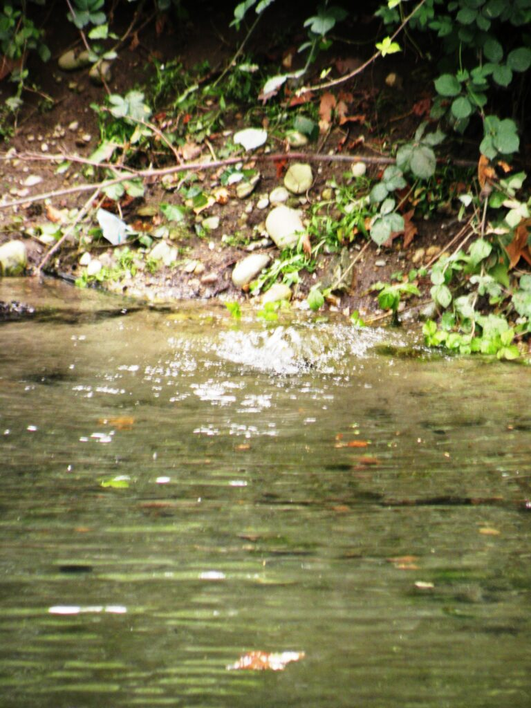 Il ribollire delle polle d'acqua sorgiva attorno al santuario. La presenza di molta acqua nella zona rendeva molto produttivi i terreni della zona