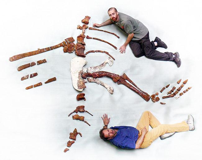 Dal Sasso (in basso) e Maganuco con scheletro Spinosaurus  - foto L. Bignami & Prehistoric Minds