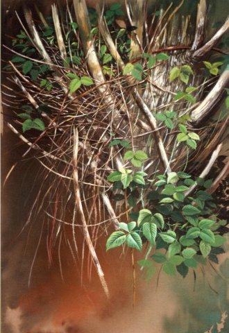 dipinto boni trephoca_thumb_l_boni-067[1]