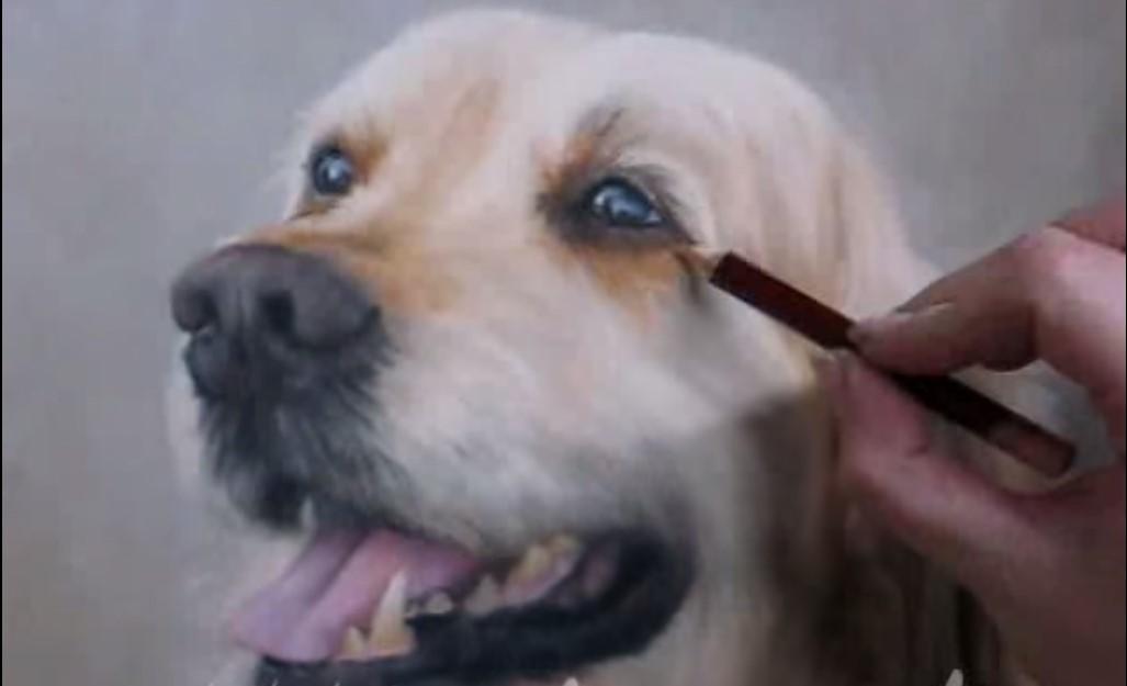 Disegnare un cane un perfetto golden retriever e vi for Cane disegno facile