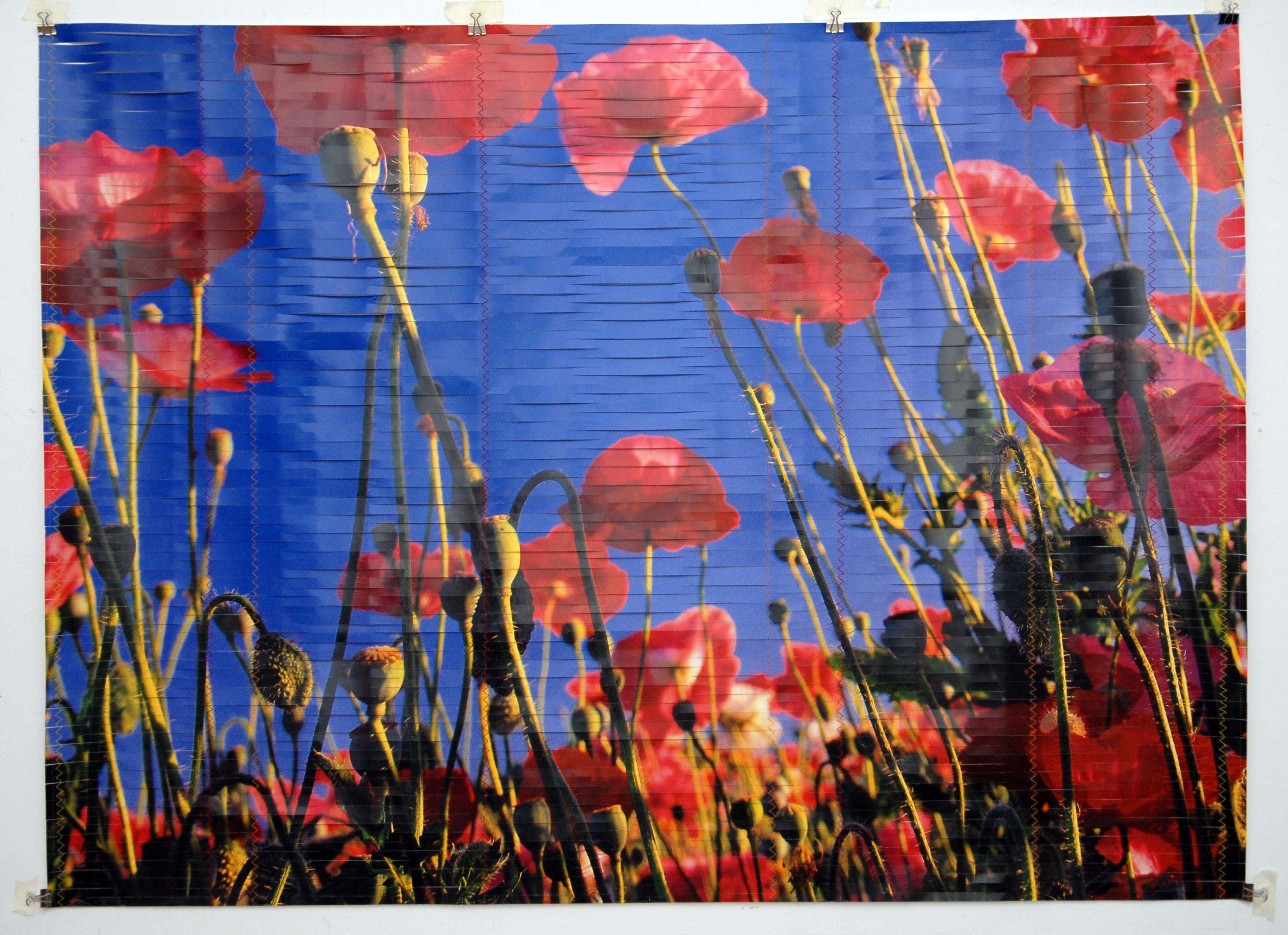 Papaveri, 2010, cuciture su poster tagliato, cm 96 x 132