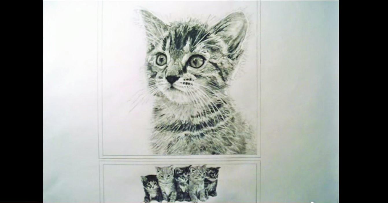 gattini disegnati