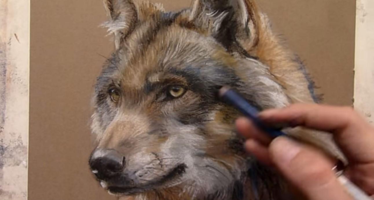 Disegnare un lupo magnifico tutorial storia e consigli - Lupo mannaro immagini da colorare ...