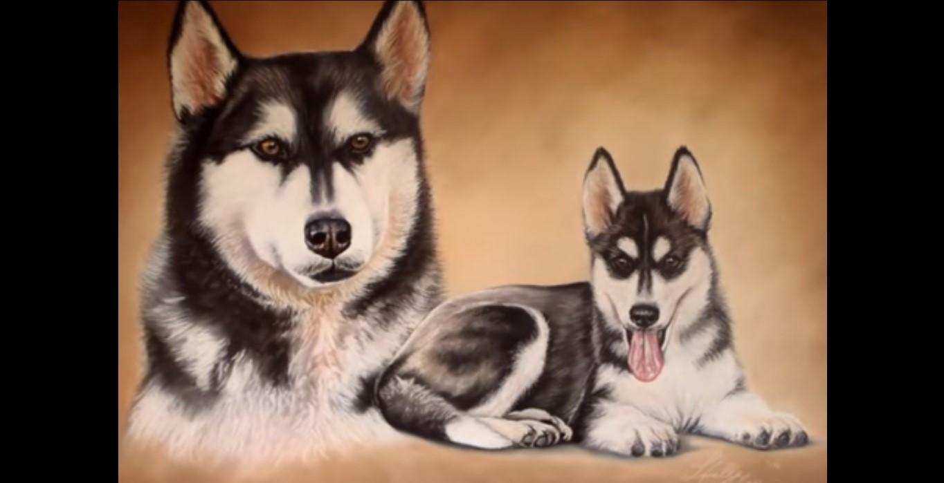 Disegnare,colorare e dipingere un cane Husky