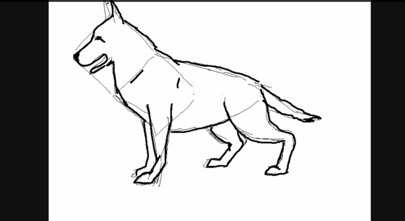 Lupo, cane lupo, pastore tedesco stilizzato, specie per i writers e la street art