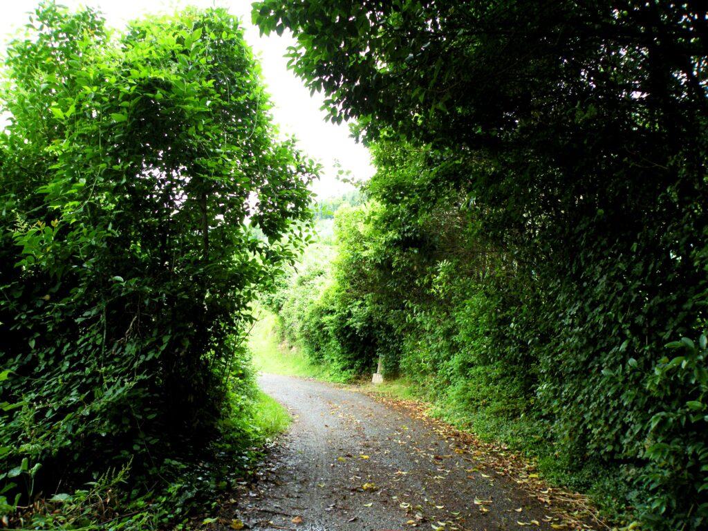 Strada romana tra Gussago e Ronco