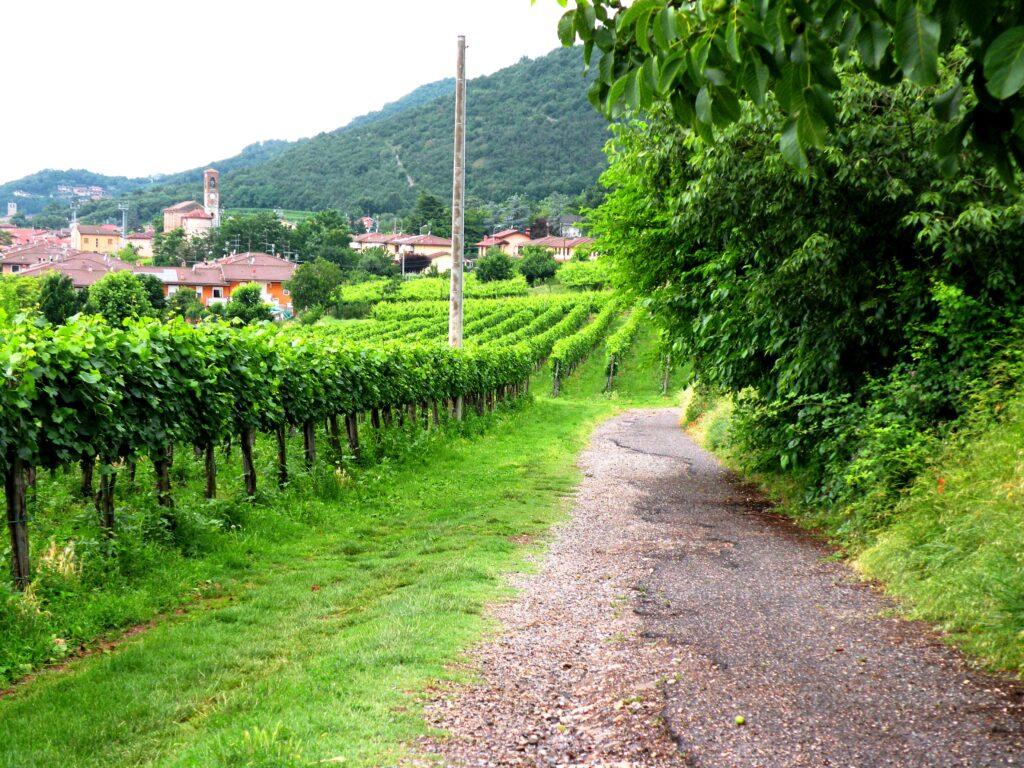 Strada romana nei pressi di Ronco