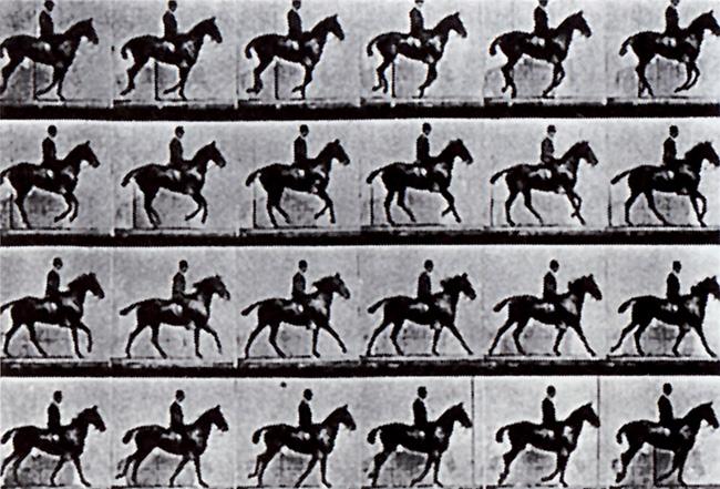 cavallo galoppo