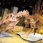 scheletro di Spinosaurus Foto di S. Maganuco