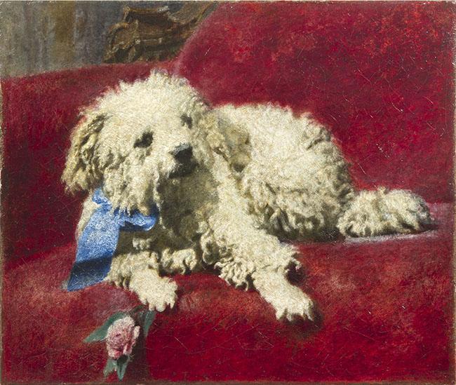 Daniele Ranzoni, Barboncino bianco (Il cagnetto Troubetzkoy), olio su tela 37 x 44 cm