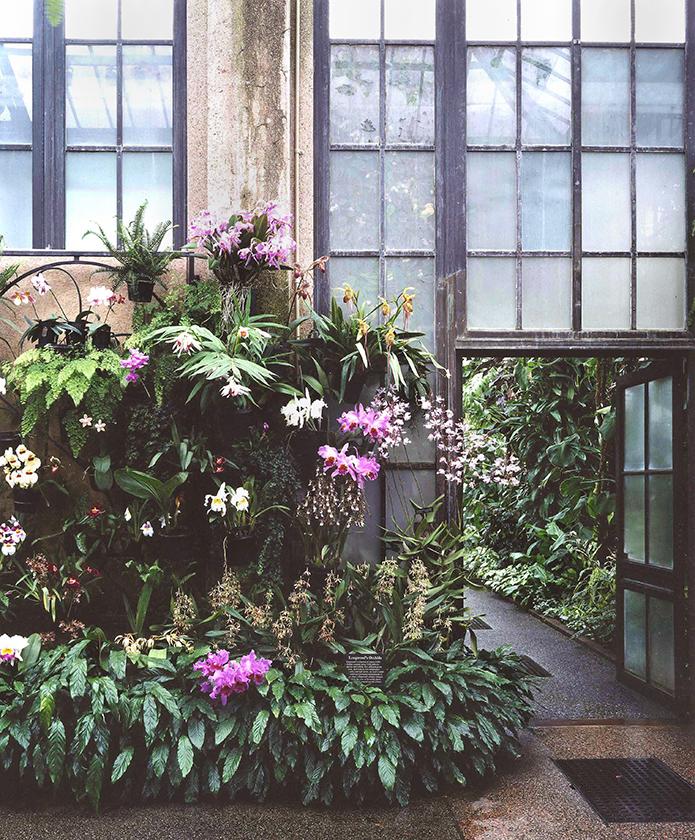 Longwood's Orchids 2001 (2)
