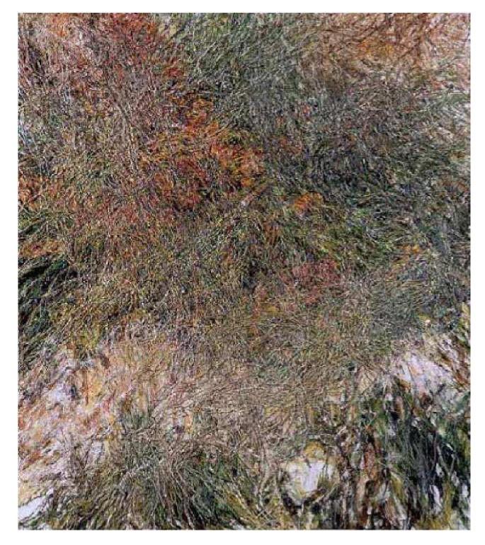 trame, olio su tela 70 x 80