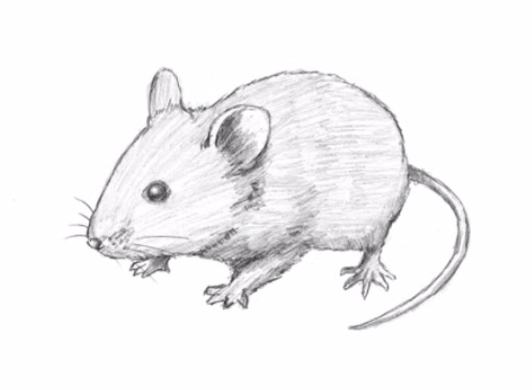 Come disegnare un topo per bambini stile arte for Come disegnare un piano casa online gratis