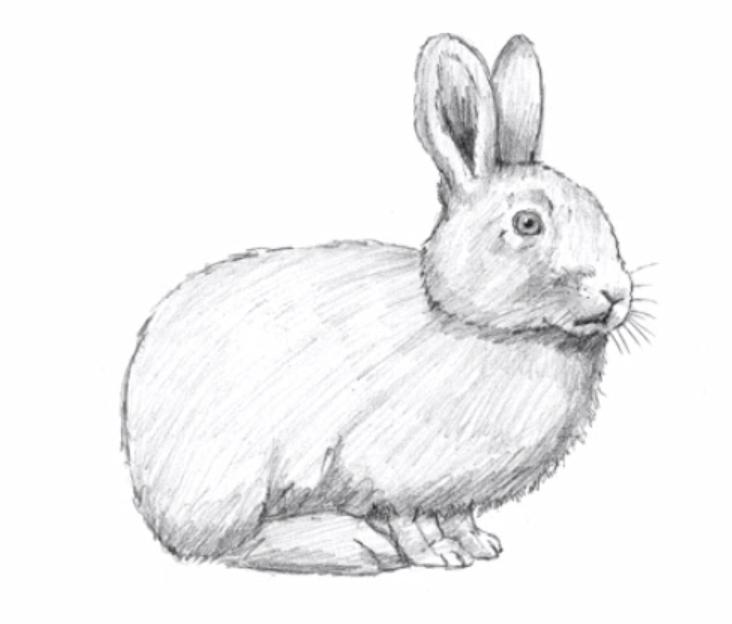 Come Disegnare Un Coniglio Stile Arte