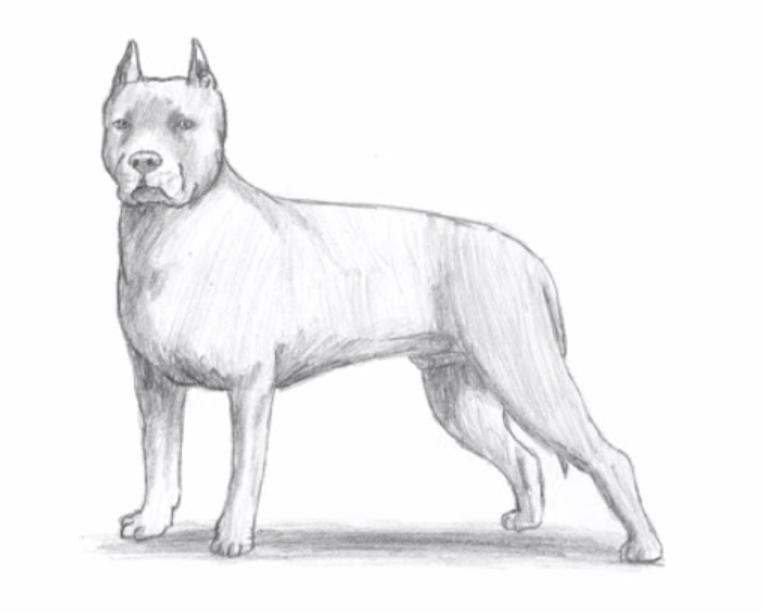 disegni da colorare cani pitbull
