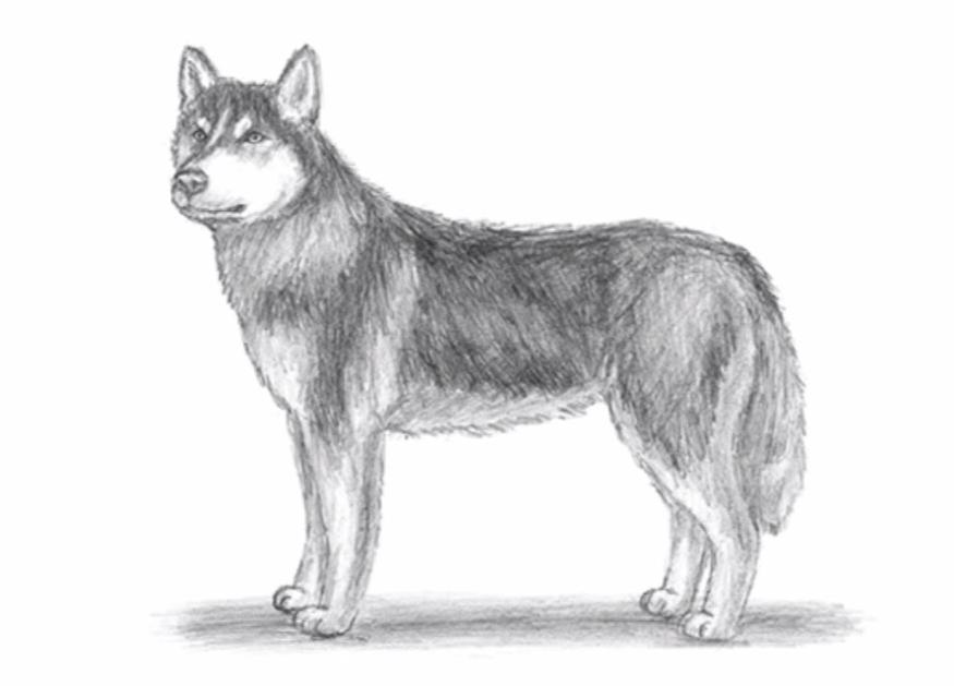 Disegni Di Cani Facili Migliori Pagine Da Colorare