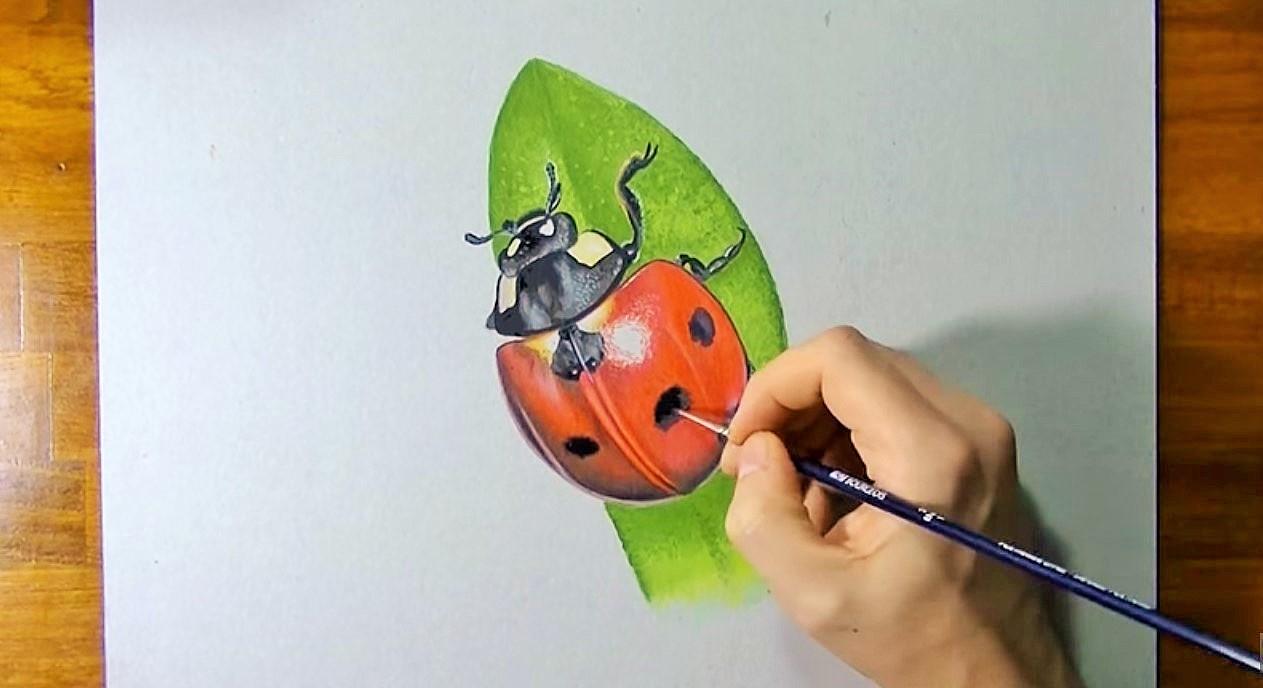 Disegnare Dipingere Una Coccinella Stile Arte