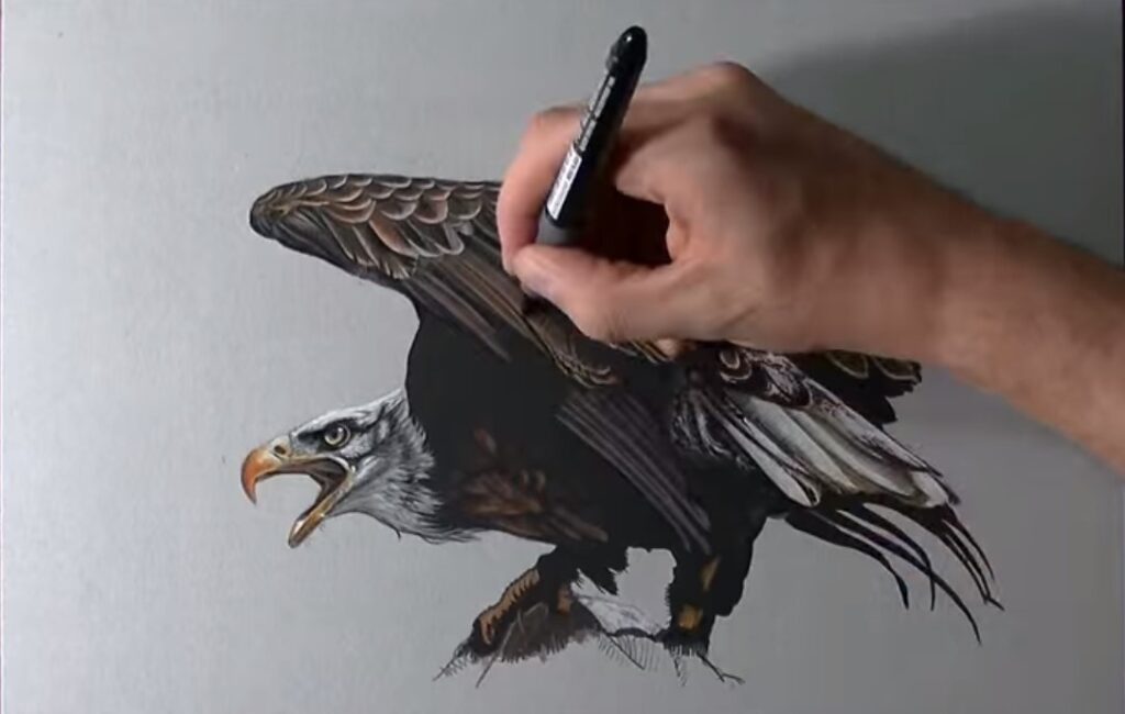 disegno aquila