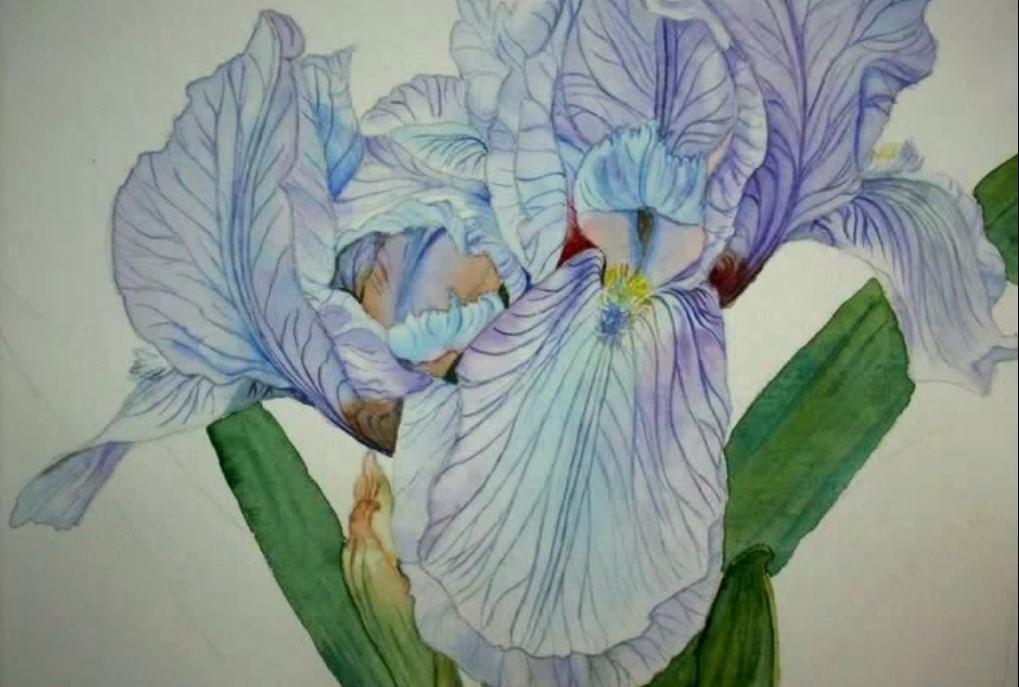 iris acquerello 2