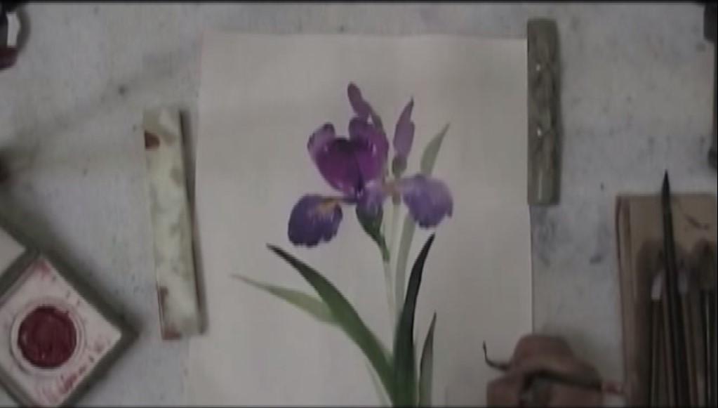 iris cinese