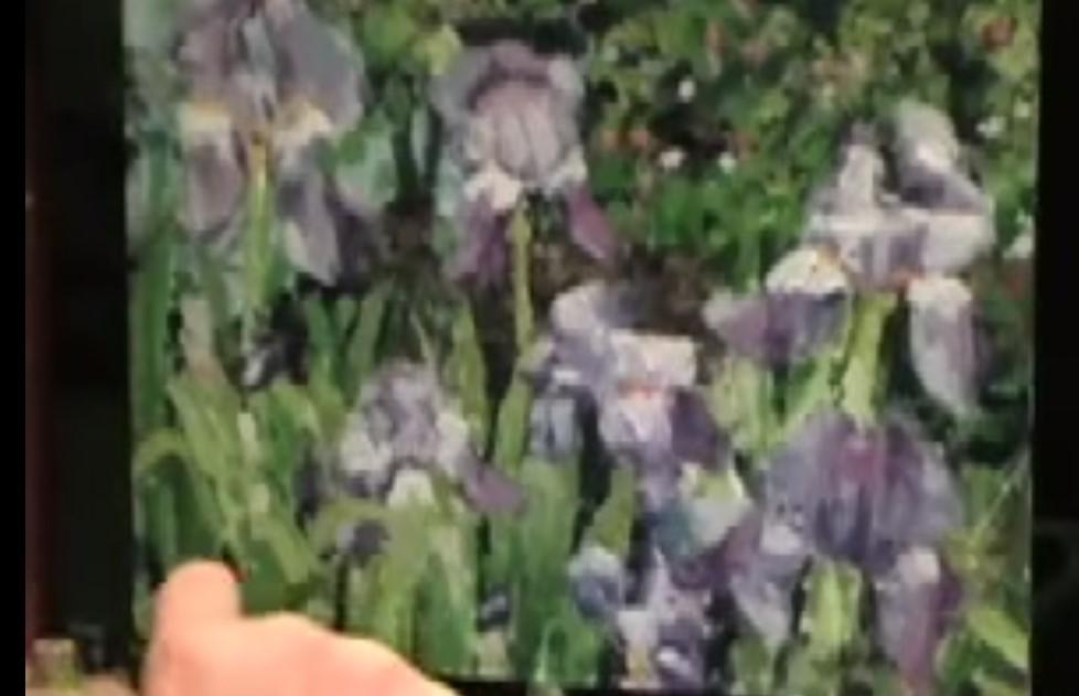 iris olio