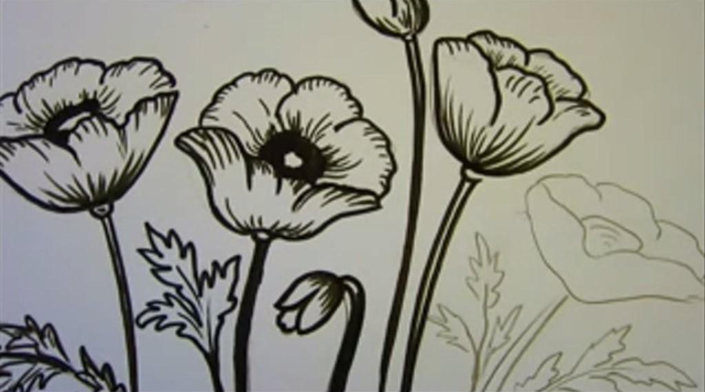 Disegnare dipingere papaveri i consigli i tutorial for Disegno vaso da colorare