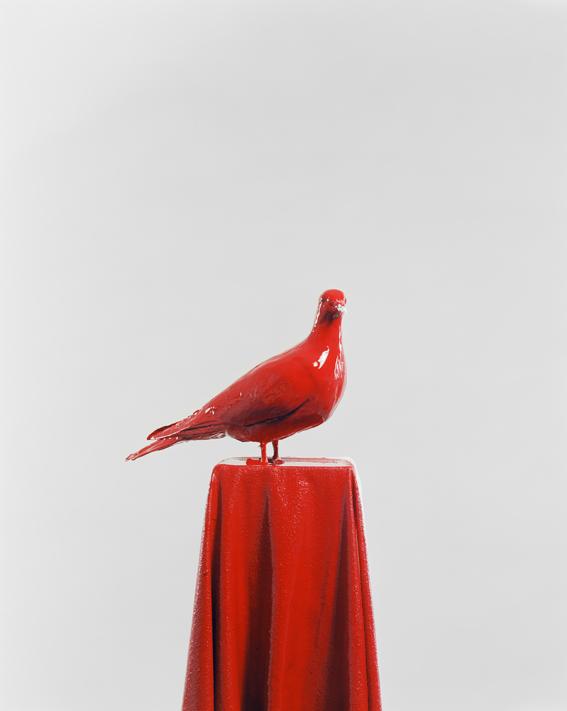 Die Taube 18_photography_Julia Krahn_2011_0