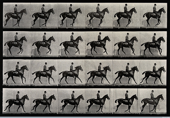 E.M.: A cantering horse and rider, 1887, Wellcome Library, educational projectCredit: Wellcome Library, London. Wellcome Images images@wellcome.ac.uk http://wellcomeimages.org A cantering horse and rider. Photogravure after Eadweard Muybridge, 1887. 1887 By: Eadweard Muybridge and University of Pennsylvania.Published: 1887 Copyrighted work available under Creative Commons Attribution only licence CC BY 4.0 http://creativecommons.org/licenses/by/4.0/