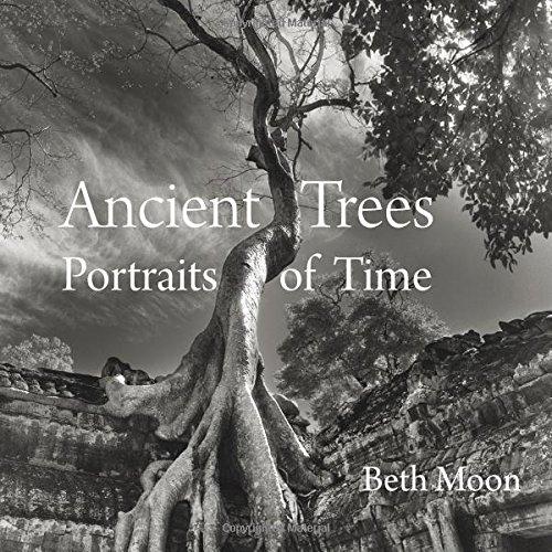 alberi libro