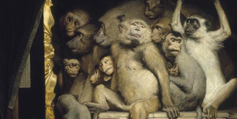 scimmia copertina