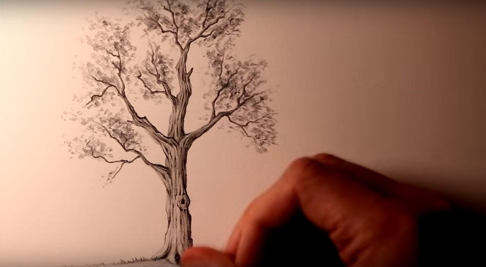 Come Disegnare Gli Alberi Video Tutorial Stile Arte