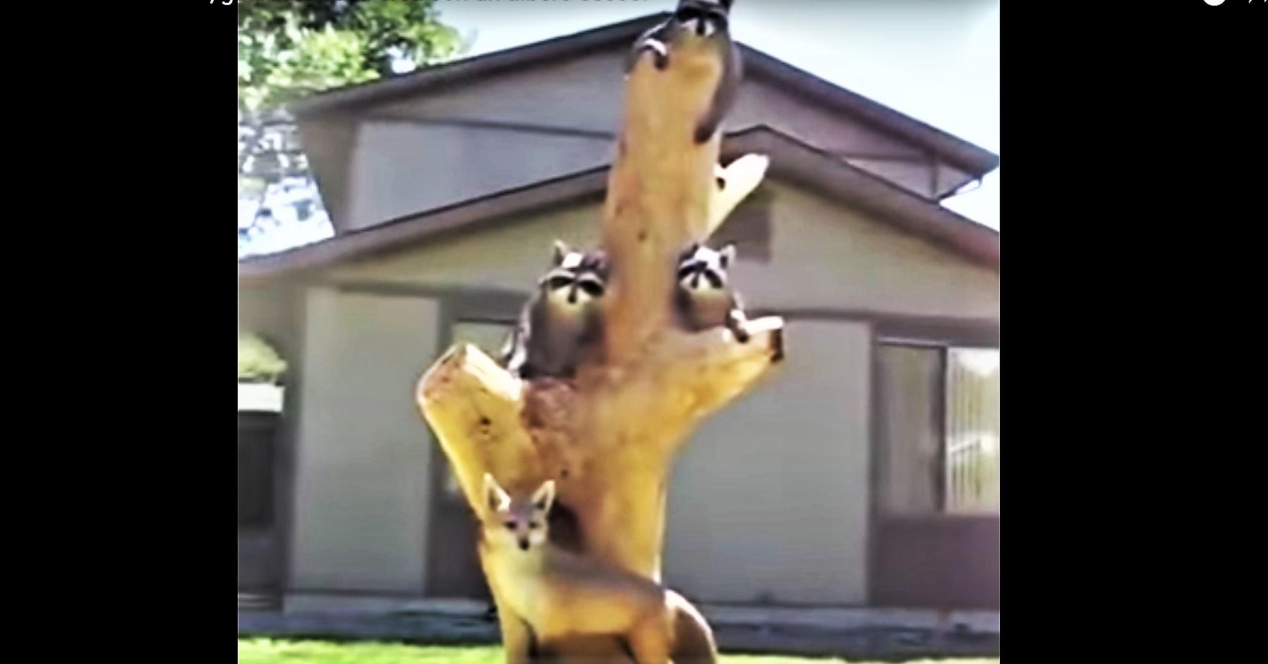 Un tronco d'albero scolpito con la motosega. Le sculture degli animali sono state dipinte con l'aerografo