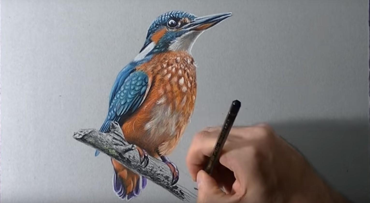 Disegnare e colorare a matita un martin pescatore il for Immagini di pesci da disegnare